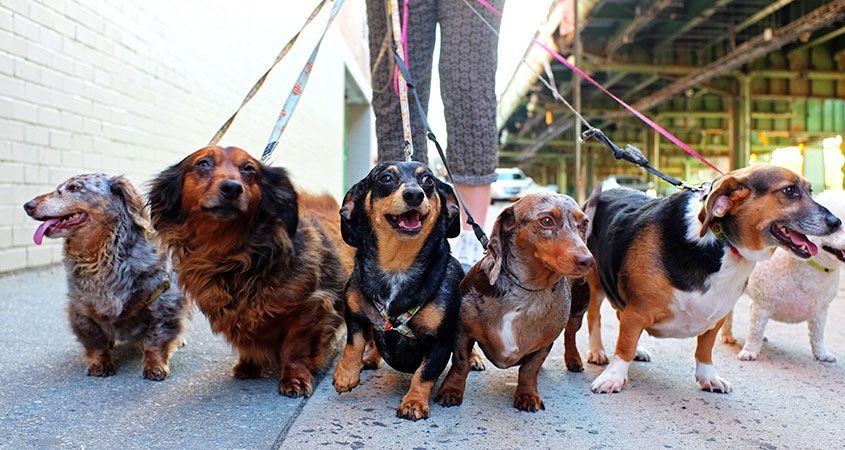 6 Tips for Mastering Dog Walking