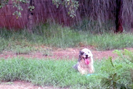 Rainy Day Dog Activities: Guide to Keeping Your Dog Occupied in ANY Weather 4