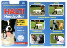 Best Halti Harness Stop Pulling Training Harness Review