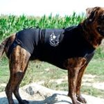Best Dog Anxiety Vests For Reducing Noise and Separation Anxiety in Dogs 2