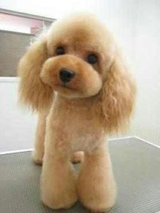 WOW! The Best Professional Dog Clippers - Groom Your Dog Like a Pro!