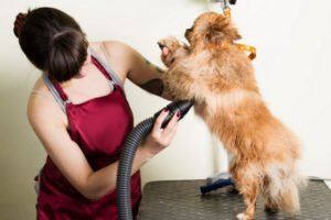 Best Dog Grooming Hair Dryer Reviews 2019 8