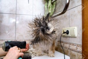 Best Dog Grooming Hair Dryer Reviews 2019 7