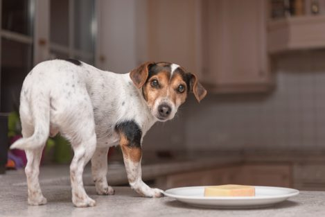What Can Dogs Eat? Human Foods To Feed Your Dog Or Avoid