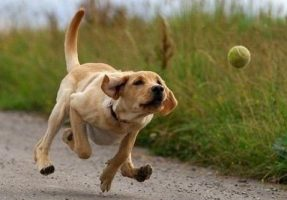 How To Teach a Dog to Fetch in 6 Simple Steps