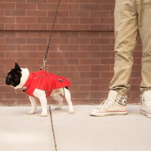 DJANGO City Slickers Waterproof dog coat