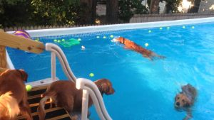 Best Paddling Pools for Dogs – Outside Fun in the Sun for your Dog 1