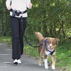 Best Dog Harnesses for Running: Walk, Run or Jog With Your Dog! 1