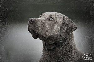 Best Dog Shock Collar – Controversial Yet Effective Dog Training 1
