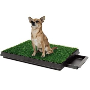 Chihuahua Dog Training - Mistakes To Avoid At All Costs 2