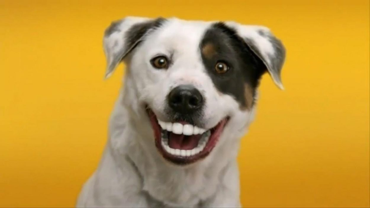 How Can I Keep my Dogs Breath Fresh 7 Days a Week?