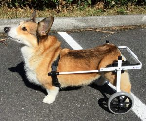 best dog wheelchairs K9 Carts
