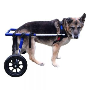 Best Dog Wheelchairs - Keep Your Dog Mobile With Any Physical Challenge 2