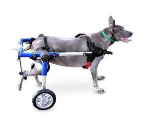 best dog wheelchairs walkin' wheels for medium dogs