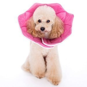 Dog Lampshade Collar Alternative: 6 Perfect Protectors for Your Dog 4