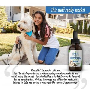 How To Choose the Best CBD Oil For Your Dog? 1