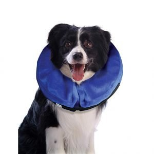 lampshade dog collar alternatives