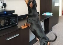 The 5 Most Important Steps to Stop Your Dog from Barking at the TV