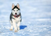 Doggie Care - Tips For The Winter! 1