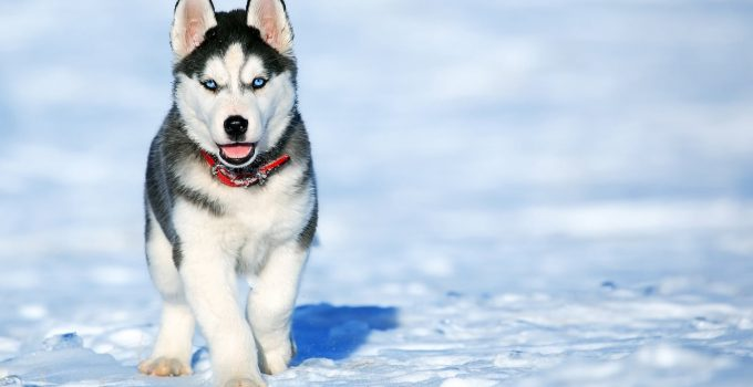 Doggie Care - Tips For The Winter! 3