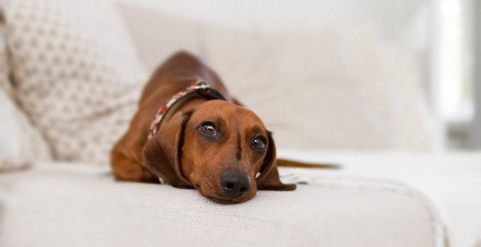 How To Teach A Stubborn Dog To Lay Down