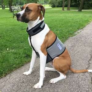 Best Dog Cooling Vests: 10 Ways to Keep your Dogs Cool in Summer 4