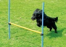 Best Dog Agility Training Equipment To Train Your Dog at Home 2019 3