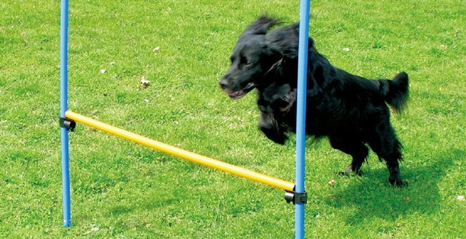 Best Dog Agility Training Equipment To Train Your Dog at Home 2019 9