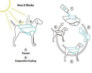 Best Dog Cooling Vests: 10 Ways to Keep your Dogs Cool in Summer 5