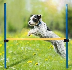 dog hurdle dog agility training equpipment