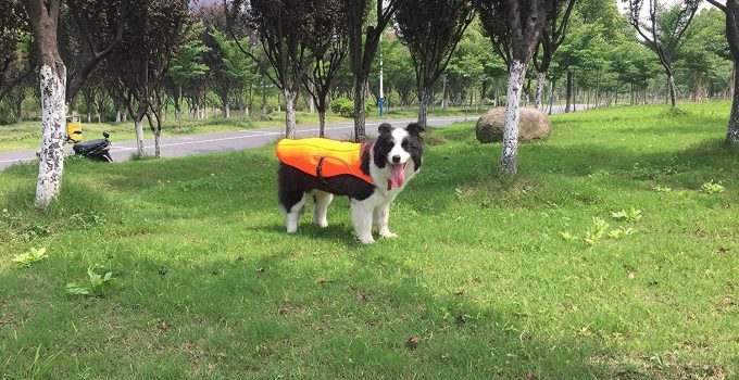 Best Dog Cooling Vests: 10 Ways to Keep your Dogs Cool in Summer 1