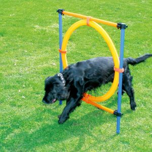 ring dog agility training equipment