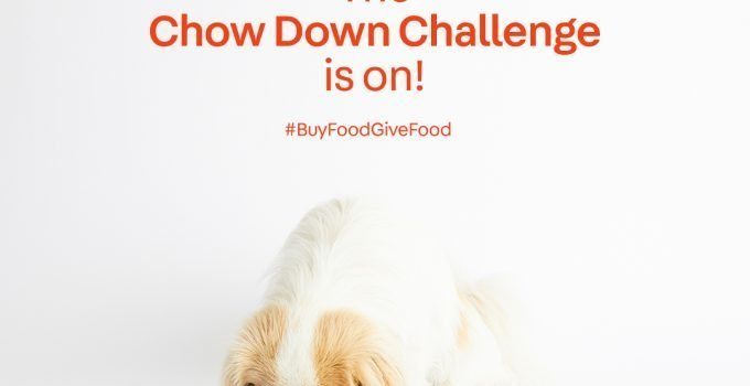 Paws.com Launches the Chow Down Challenge to Feed  250,000 Shelter Dogs
