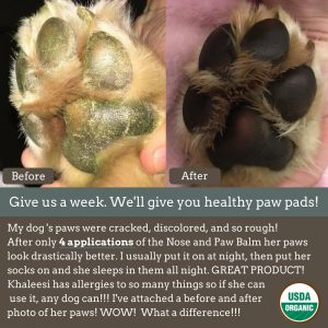 Best Dog Paw Balm – Instant Protection for your Doggies 4 Paws 5