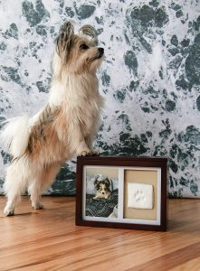 Remember your Dog with the Top 9 Memorial Urns for Dog Ashes 6