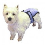 5 Amazing Dog Diapers Guide: Support Your Dogs Urinary Problems 3