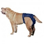 5 Amazing Dog Diapers Guide: Support Your Dogs Urinary Problems 4