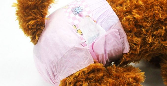 5 Amazing Dog Diapers Guide: Support Your Dogs Urinary Problems 12