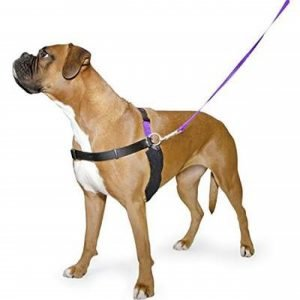Ancol Dog Harness Buyers Guide