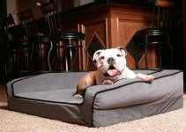 Buddyrest Memory Foam Dog Bed - Best Memory Foam Dog Bed
