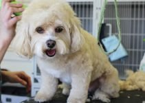 Top 10 Tips on Using The Best Dog Grooming Clippers At Home 6
