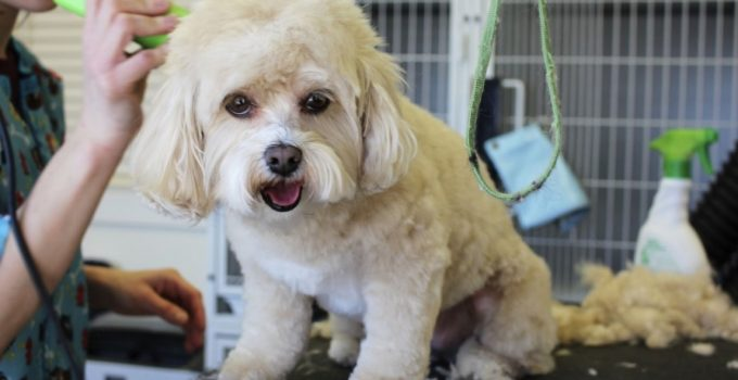 Top 10 Tips on Using The Best Dog Grooming Clippers At Home