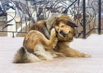 Dog Flea Treatment to Guarantee Amazing Results in 1 Attempt