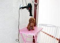 Best Dog Grooming Hair Dryer Reviews 2020