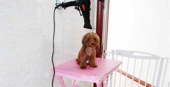 Best Dog Grooming Hair Dryer Reviews