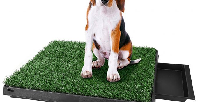 How to Potty Train a Dog With Pads: The Quick and Easy Way 2020