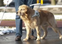 Best Guide Dog Harnesses and Training Accessories 15
