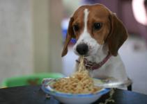 Homemade Dog Food & Treats - 100% Money Saving Advice