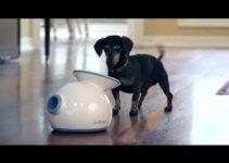 The Best Automatic Dog Fetch Machine 2019 3