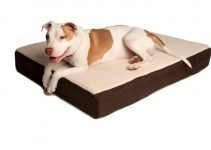 Best Large Orthopedic Dog Beds: 9 Reasons To Own One